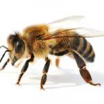 How Sweet is Honey
